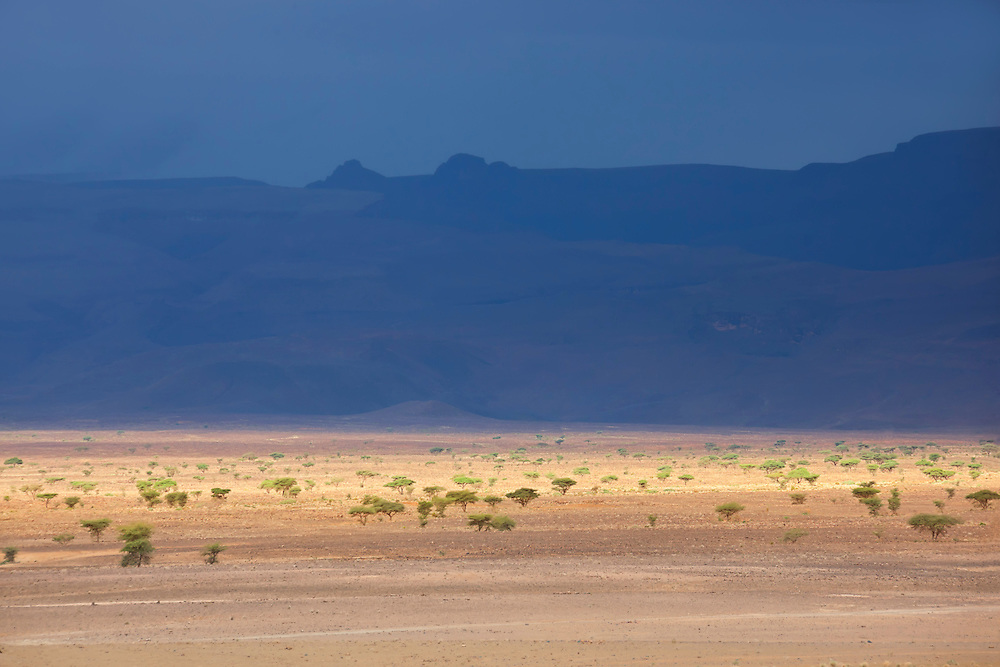 Desert landscape with dark sky and acacia trees in the Sahara, Morocco.