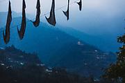 Enchey Monastery on a hilltop of Gangtok, Sikkim, India