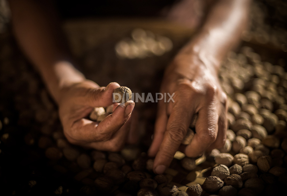 A woman sorts nutmeg at a warehouse on Banda Neira. The once precious spice that drove the first circumnavigation of the globe declined sharply in value once plantations were established outside Banda.