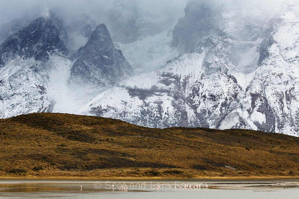 Flamingos dine below the mountains in Torres del Paine National Park in Chile.