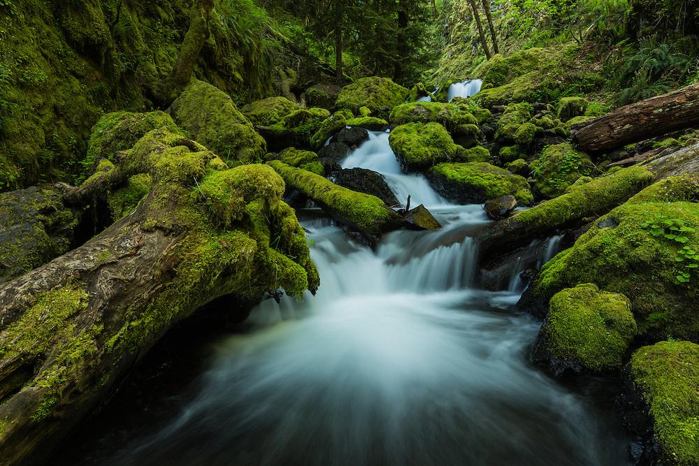 intimate landscape scene along Gorton Creek, Columbi River Gorge, Oregon