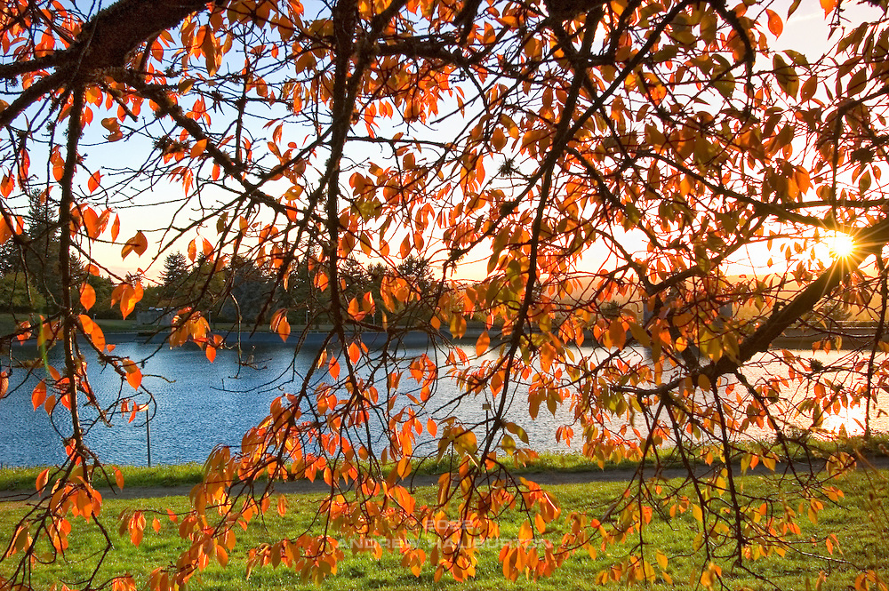 View of Reservoir 5 through autumn leaves at sunset, Mt Tabor Park.  This is one of three open reservoirs at Mt Tabor Park and of five total in Portland.  The 3 open reservoirs in Mount Tabor Park were placed in the National Register of Historic Places on January 15, 2004.  Environmental Protection Agency (EPA) regulation: Long Term 2 Enhanced Surface Water Treatment Rule, referred to as the LT2 rule imposes new requirements that open water reservoirs be covered, buried or additionally treated.  This applies to Portland's five open reservoirs and to the unfiltered Bull Run sourse supplying them.