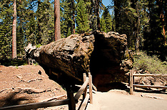 Sequoia Kings Canyon Park 2012