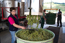 08.09.2015, Buchholz, GER, Weinlese, im Bild Beginn der Weinlese der Rebsorte Mueller-Thurgau, Anlieferung bei der Winzergenossenschaft // Beginning of the harvest of the grape variety Müller-Thurgau, delivery at the winery in Buchholz, Germany on 2015/09/08. EXPA Pictures © 2015, PhotoCredit: EXPA/ Eibner-Pressefoto/ Fleig<br /> <br /> *****ATTENTION - OUT of GER*****