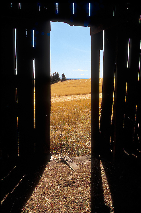 Eastern Montana:  Harvested fields of golden wheat glow through the slats of an old barn.  Specific location unknown.