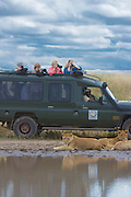 Safari visitors photograph lion pride at close range, Serengeti National Park, Tanzania