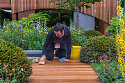 Last minute scrubbing of the Homebase Urban Retreat Garde by Adam Frost - RHS Chelsea Flower Show, Chelsea Hospital, London UK, 18 May 2015. Guy Bell, 07771 786236, guy@gbphotos.com