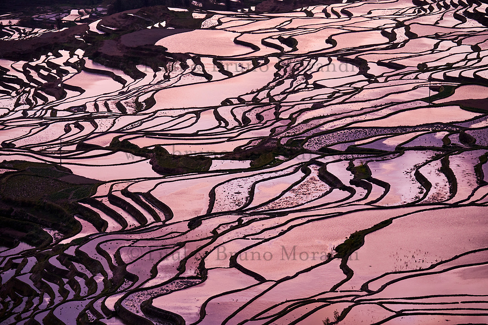 Chine, Province du Yunnan, Yuanyang, rizieres en eau // China, Yunnan, Yuanyang, terraced paddy-fields