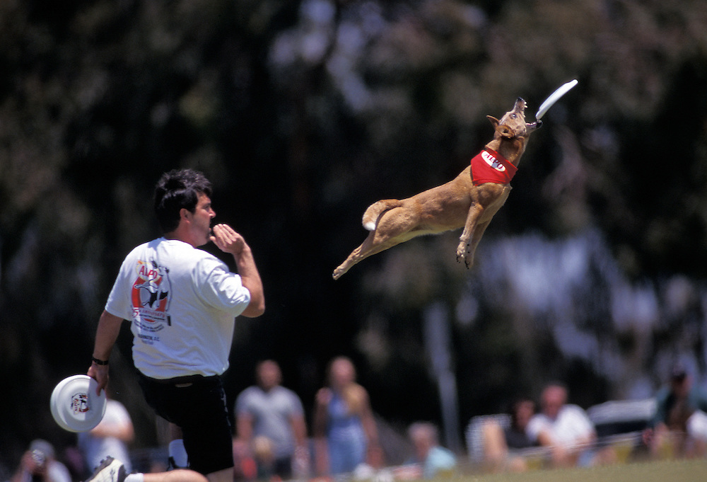 The Canine Frisbee Disc Championship held in San Diego. Photographed for Sports Illustrated.