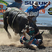 Jimmy Booth from Fairlie in action during the Open Bull ride contest at  the Millers Flat Rodeo. Otago, New Zealand. 26th December 2011