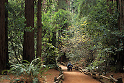 Park Visitor, Wheelchair, mobility, disabled, Muir Woods National Monument, California