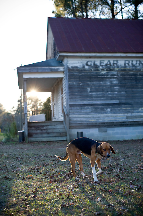 A Hunting dog wanders by Clear Run Grocery at sunset.