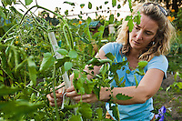 A woman working in her vegetable garden.