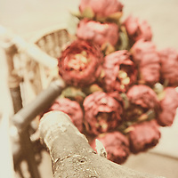 A bunch of red roses in the basket of an old fashion bike