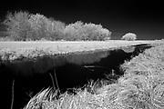Wetland<br />Hecla Provincial Park<br />Manitoba<br />Canada