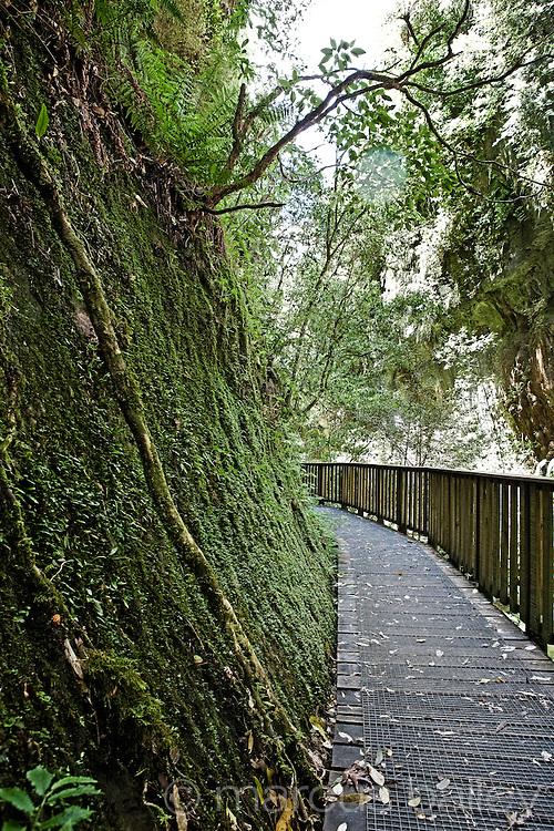 trees and moss growing on limestone rocks along the mangapohue walkway at waitomo, new zealand