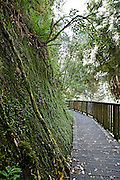 trees and moss growing on limestone rocks along the mangapohue walkway at waitomo, new zealand
