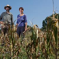 St Pantaleon, France le 25 juin 2014. Philippe et Katja Ruamps produisent de l ail et de l oignon bio.