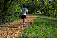The runner's feet barely touches the ground as she glides along a golden path along the Reservoir in Central Park.