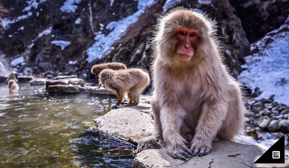 Japan, Jigokudani, Snow Monkeys
