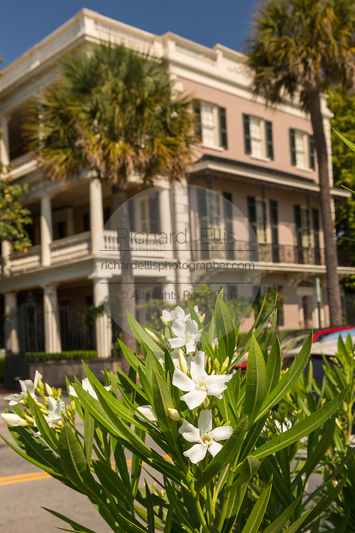 Oleander  blooms at the Edmonston-Alston House on East Battery in historic Charleston, SC.