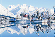 Alaska. Valdez. Winter boat harbor scenic with commercial fishing boats and Chugach Mountains.