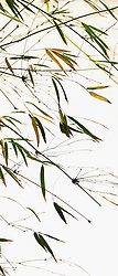 Bamboo vert #8