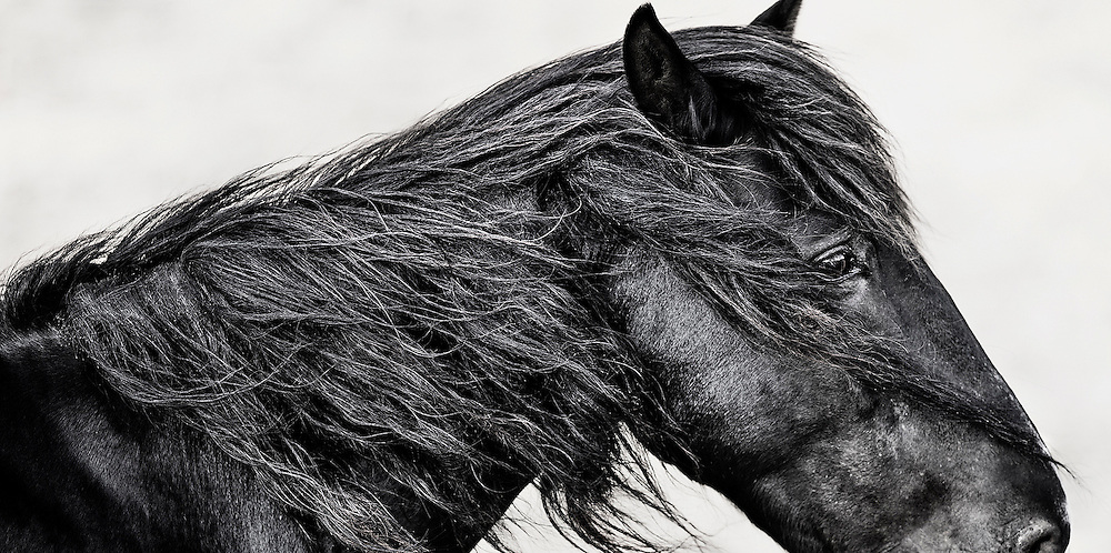 THE ALGONQUIN TRIBE&rsquo;S NAME FOR &lsquo;MY HEART&rsquo; IS NUTTAH. <br />