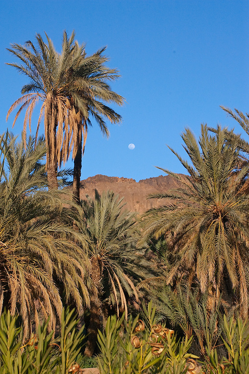 The moon over palm trees at an oasis, Ouarzazate, Morocco.