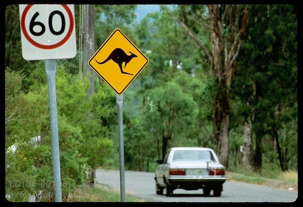 Car speeds along highway past kangaroo-crossing sign in rural area outside city of Brisbane. Australia