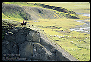 ICELAND 30105: SHEEP ROUNDUP