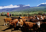 Kaupo ranch, Maui, Hawaii
