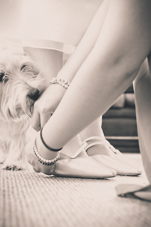 The family dog inspects the bridal shoes! Oxfordshire wedding professionally captured by Steven O'Gorman - photographer