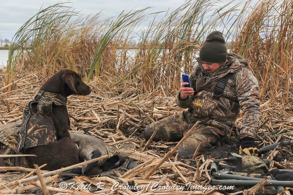 Hunter using a cell phone to photograph his Young Labrador Retriever During a Manitoba Waterfowl Hunt