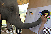 """Jaab, an elephant at the Elephant Life Experience (ELE) north of Chiang Mai paints a guitar during a press conference.  Wendy Dio, former wife of legendary Black Sabbath  guitarist Ronny Dio and former Black Sabbath bassist and lyricist Terry """"Geezer"""" Butler were on hand at the camp as part of a joint effort to raise funds for cancer research and elephant conservation. The elephants at the camp will paint guitars by famous musicians, which will then be sold at a New York auction house. Ronny Dio died last year from stomach cancer and so his widow Wendy is raising money in an appeal called the """"Stand Up and Shout Cancer Fund. Supervising Jaab is Thai artist Cholasinth Chorsakul."""