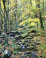 A Small Quiet Stream Flowing Over Rocks Amid Lush Autumn Foliage In The Great Smoky Mountains National Park, Tennessee, USA