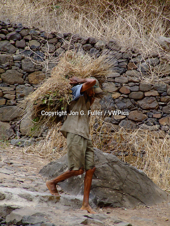 A barefoot farmer carries feed for his animals on a trail near the farming village of Fontainhas, Santo Antao, Republic of Cabo Verde, Africa.