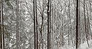 Snow fall in Mount Tabor Park, 10 January 2017. Photo: 11-JAN-2016. Nikon D700.
