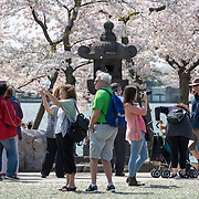 Tourists next to the 16th century Japanese stone lantern next to the Tidal Basin, amongst the cherry blossoms, in Washington DC.