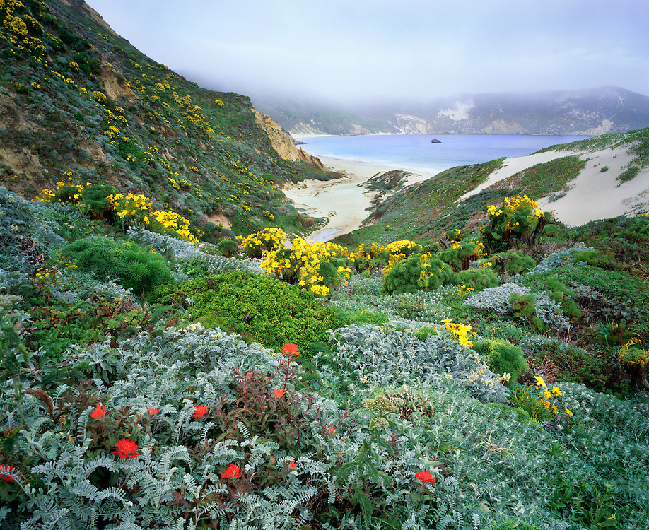 0603-6001B  ~  Copyright:  George H. H. Huey ~  Nidever Canyon with paintbrush and giant coreopsis, and Cuyler Harbor with fog.  San Miguel Island.  Channel Islands National Park, California.