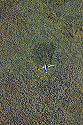 Aerial of crashed plane in the Amazon basin, Eastern Lowlands,  Bolivia, South America