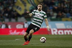 February 3, 2019 - Lisbon, Portugal - Sebastian Coates of Sporting in action during Primeira Liga 2018/19 match between Sporting CP vs Moreirense FC, in Lisbon, on February 3, 2019. (Credit Image: © Carlos Palma/NurPhoto via ZUMA Press)