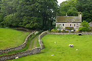 Sheep grazing in meadow and dry stone wall in Yorkshire Dales at Smardale Gill, England