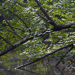 Trees, Hamilton Reservoir, Holland, Massachusetts, US