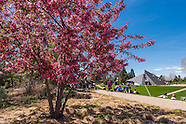 20160422 Spring Gardens