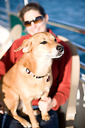 Nina, Capt. Joe's dog, sits at the helm of the Shamrock.