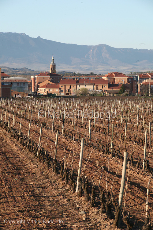Rioja  Vineyards,  near Fuenmayor,  Spain.