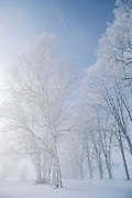 Snow squall blowing through trees.