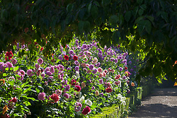 The dahlia border at Rousham House Garden