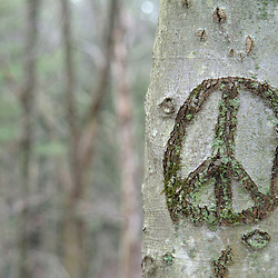 Peace sign carved into tree in forest